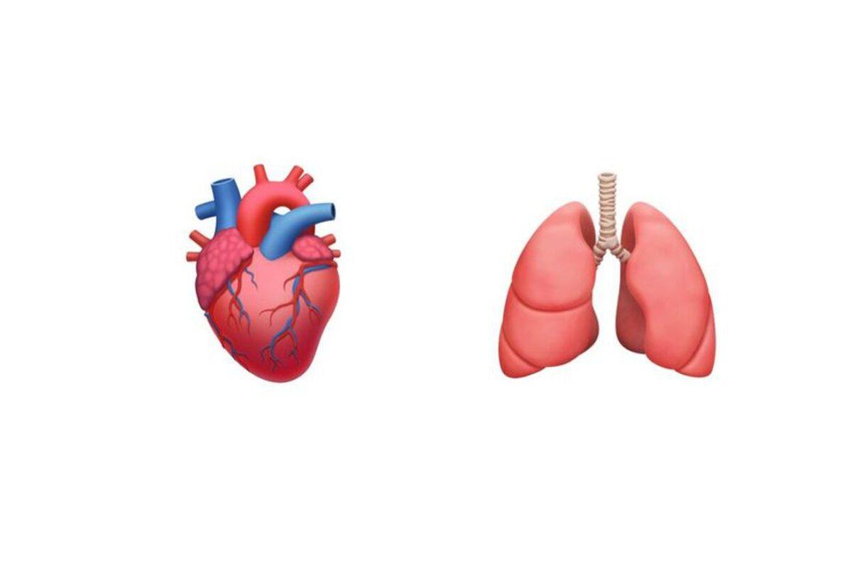 ios anatomical heart lungs new emoji 2020.0